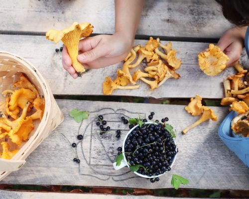 https://dmo.visitkarelia.fi/files/vk-harri-tarvainen-berriesmushrooms-jpg.jpg