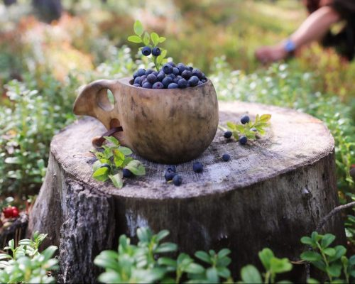 https://dmo.visitkarelia.fi/files/vk-harri-tarvainen-blueberries-cup-jpg-e1597747643458.jpg