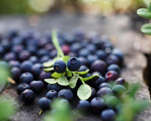 https://dmo.visitkarelia.fi/files/vk-harri-tarvainen-blueberries-jpg-e1602503473864.jpg